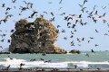 San Giovanni Rotondo NET - Comitato per la tutela del mare del Gargano