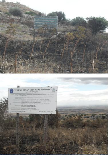 San Giovanni Rotondo NET - La zona incendiata nei pressi del monumento a San Michele