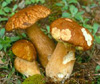 Corso identificazione specie fungine