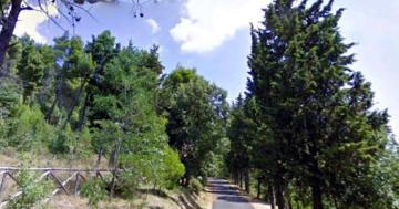 Ragazzini dispersi nel bosco, ritrovati dopo poche ore