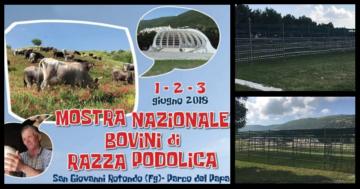 """La vacca podolica in mostra al 'Parco del Papa'. Pennelli: """"Follia amministrativa"""""""