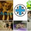 Cani avvelenati: un anno fa la macabra scoperta