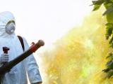 Avviso disinfestazione ambientale, derattizzazione e disinfezione