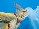 Salvare il mare e il pianeta dalla plastica